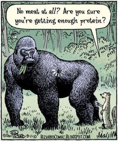 But What About Protein? Reply #10234 to this question.