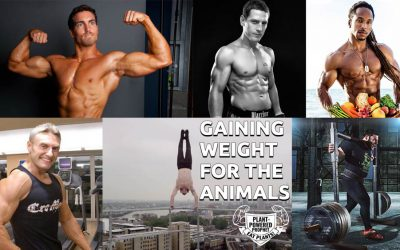 Vegan Gains for The Animals Pt 2 | Body Building for Veganism