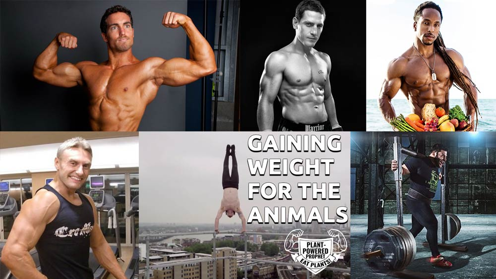 Making Weight Gains for The Animals | Body Building for Veganism